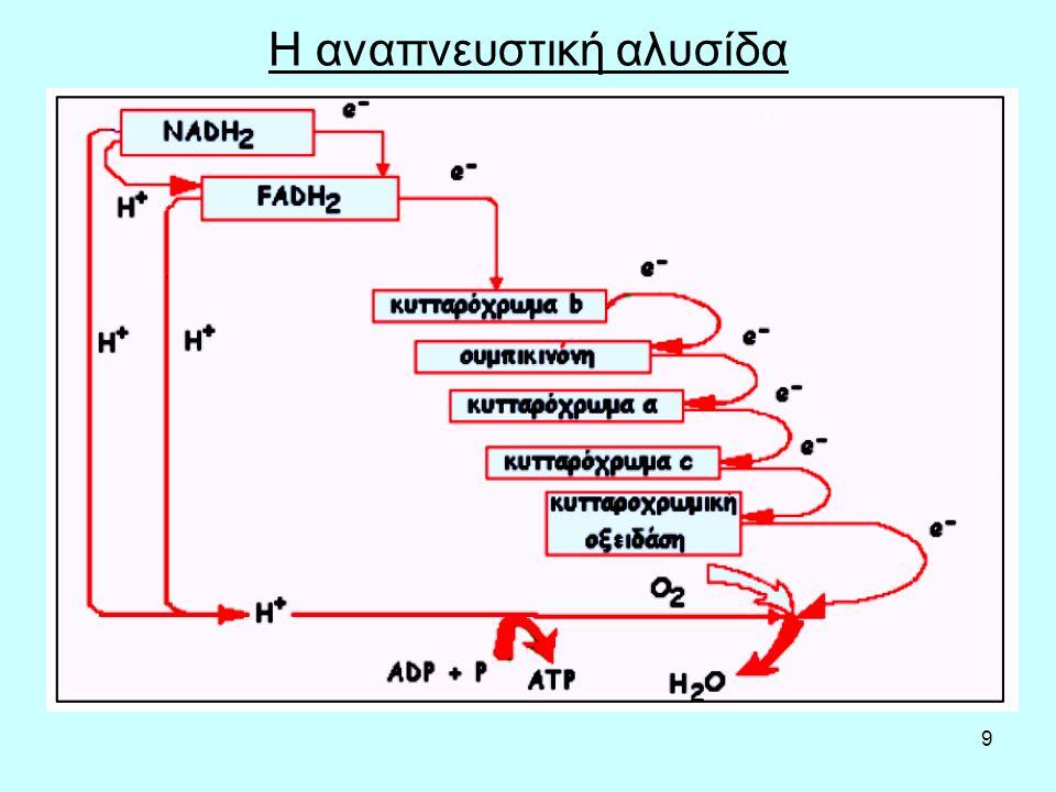 9 Η αναπνευστική αλυσίδα