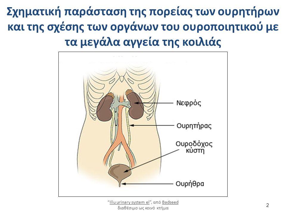 Σχηματική παράσταση της πορείας των ουρητήρων και της σχέσης των οργάνων του ουροποιητικού με τα μεγάλα αγγεία της κοιλιάς 2 Illu urinary system el , από Badseed διαθέσιμο ως κοινό κτήμαIllu urinary system elBadseed