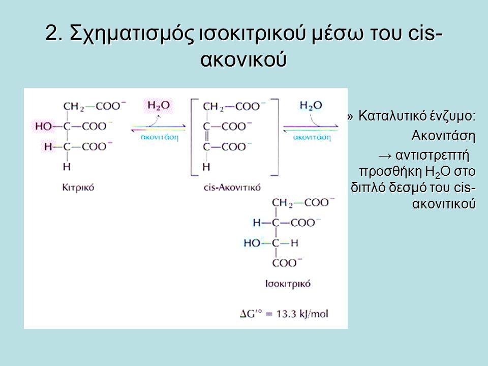 2. Σχηματισμός ισοκιτρικού μέσω του cis- ακονικού »Καταλυτικό ένζυμο: Ακονιτάση → αντιστρεπτή προσθήκη Η 2 Ο στο διπλό δεσμό του cis- ακονιτικού