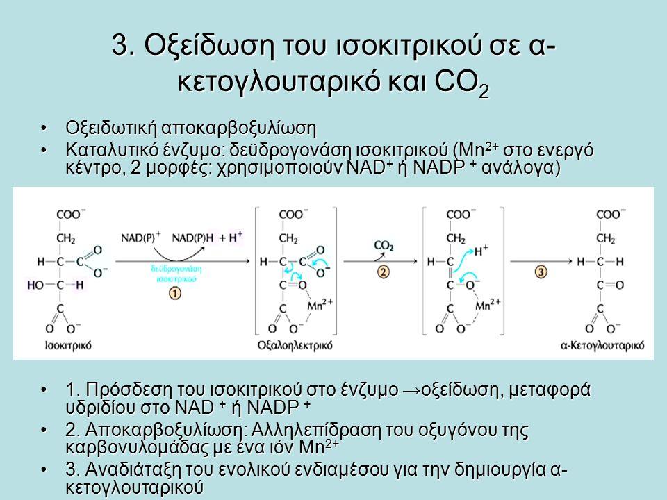 3. Οξείδωση του ισοκιτρικού σε α- κετογλουταρικό και CO 2 Οξειδωτική αποκαρβοξυλίωσηΟξειδωτική αποκαρβοξυλίωση Καταλυτικό ένζυμο: δεϋδρογονάση ισοκιτρ