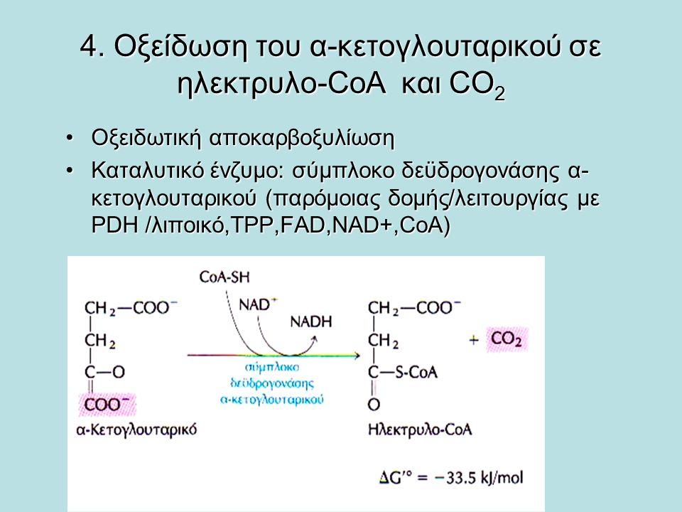 4. Οξείδωση του α-κετογλουταρικού σε ηλεκτρυλο-CoA και CO 2 Οξειδωτική αποκαρβοξυλίωσηΟξειδωτική αποκαρβοξυλίωση Καταλυτικό ένζυμο: σύμπλοκο δεϋδρογον