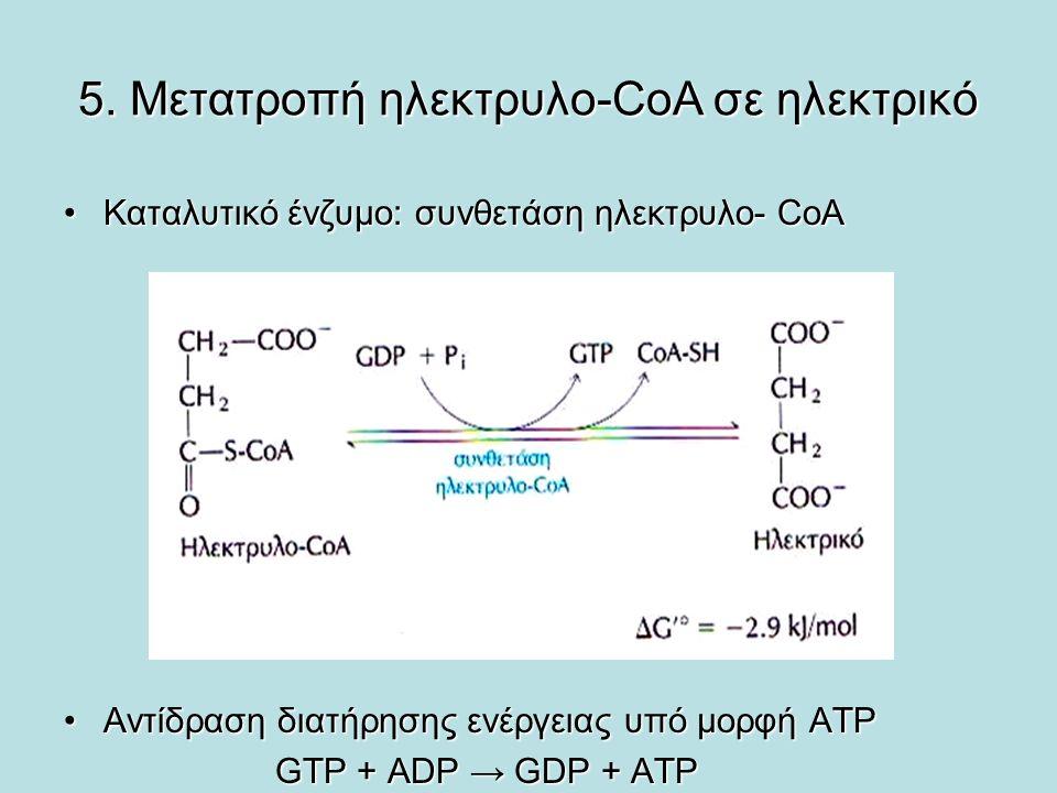 5. Μετατροπή ηλεκτρυλο-CoA σε ηλεκτρικό Καταλυτικό ένζυμο: συνθετάση ηλεκτρυλο- CoΑΚαταλυτικό ένζυμο: συνθετάση ηλεκτρυλο- CoΑ Αντίδραση διατήρησης εν