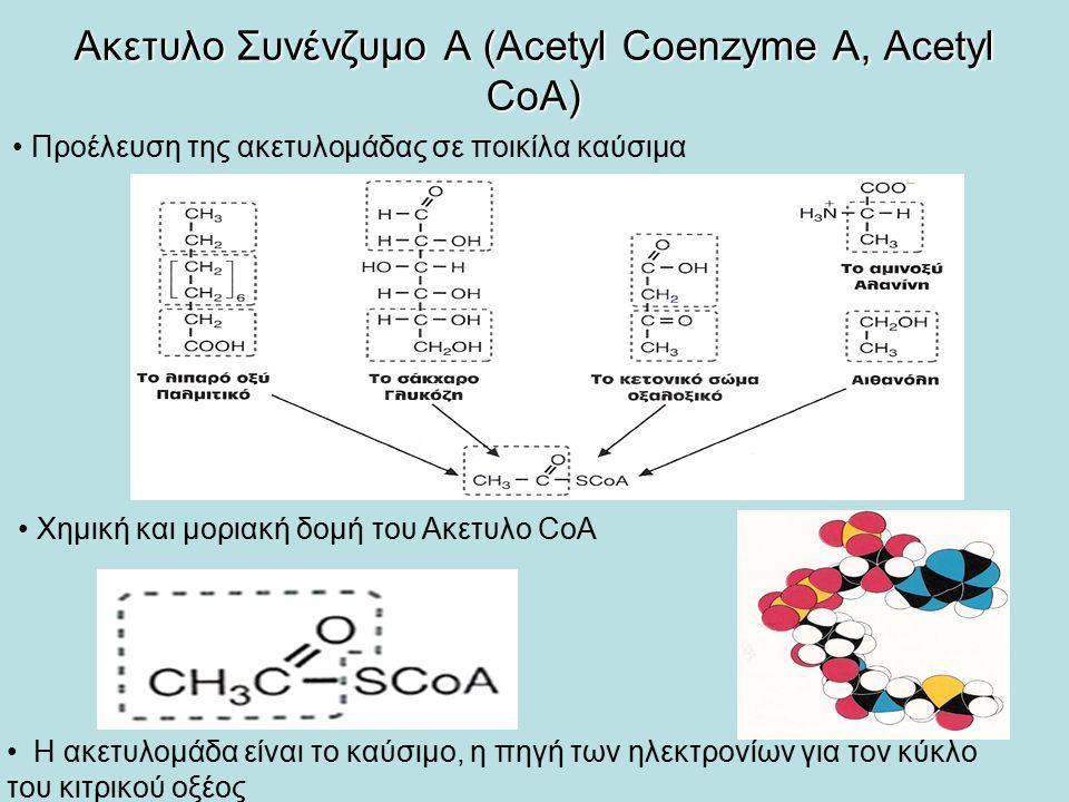 Ακετυλο Συνένζυμο Α (Acetyl Coenzyme A, Acetyl CoA) Η ακετυλομάδα είναι το καύσιμο, η πηγή των ηλεκτρονίων για τον κύκλο του κιτρικού οξέος Προέλευση