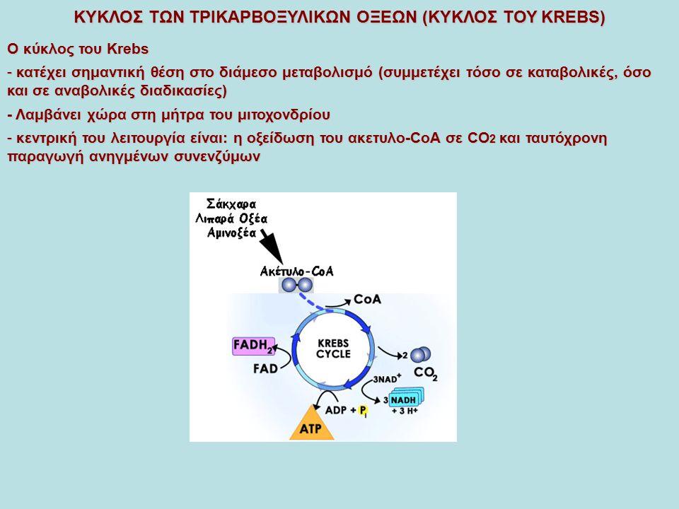 ΚΥΚΛΟΣ ΤΩΝ ΤΡΙΚΑΡΒΟΞΥΛΙΚΩΝ ΟΞΕΩΝ (ΚΥΚΛΟΣ ΤΟΥ KREBS) O κύκλος του Κrebs - κατέχει σημαντική θέση στο διάμεσο μεταβολισμό (συμμετέχει τόσο σε καταβολικές, όσο και σε αναβολικές διαδικασίες) - Λαμβάνει χώρα στη μήτρα του μιτοχονδρίου - κεντρική του λειτουργία είναι: η οξείδωση του ακετυλο-CoA σε CO 2 και ταυτόχρονη παραγωγή ανηγμένων συνενζύμων