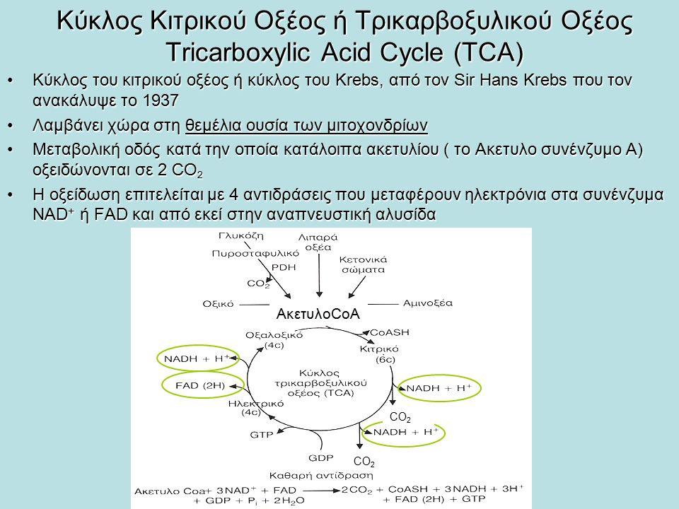 Κύκλος Κιτρικού Οξέος ή Τρικαρβοξυλικού Οξέος Tricarboxylic Acid Cycle (TCA) Κύκλος του κιτρικού οξέος ή κύκλος του Krebs, από τον Sir Hans Krebs που τον ανακάλυψε το 1937Κύκλος του κιτρικού οξέος ή κύκλος του Krebs, από τον Sir Hans Krebs που τον ανακάλυψε το 1937 Λαμβάνει χώρα στη θεμέλια ουσία των μιτοχονδρίωνΛαμβάνει χώρα στη θεμέλια ουσία των μιτοχονδρίων Μεταβολική οδός κατά την οποία κατάλοιπα ακετυλίου ( το Ακετυλο συνένζυμο Α) οξειδώνονται σε 2 CO 2Μεταβολική οδός κατά την οποία κατάλοιπα ακετυλίου ( το Ακετυλο συνένζυμο Α) οξειδώνονται σε 2 CO 2 Η οξείδωση επιτελείται με 4 αντιδράσεις που μεταφέρουν ηλεκτρόνια στα συνένζυμα ΝΑD + ή FAD και από εκεί στην αναπνευστική αλυσίδαΗ οξείδωση επιτελείται με 4 αντιδράσεις που μεταφέρουν ηλεκτρόνια στα συνένζυμα ΝΑD + ή FAD και από εκεί στην αναπνευστική αλυσίδα ΑκετυλοCoA CO 2