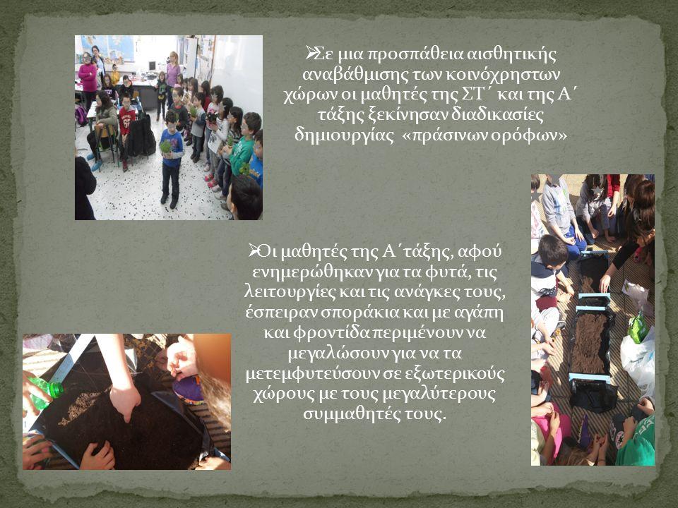  Σε μια προσπάθεια αισθητικής αναβάθμισης των κοινόχρηστων χώρων οι μαθητές της ΣΤ΄ και της Α΄ τάξης ξεκίνησαν διαδικασίες δημιουργίας «πράσινων ορόφων»  Οι μαθητές της Α΄τάξης, αφού ενημερώθηκαν για τα φυτά, τις λειτουργίες και τις ανάγκες τους, έσπειραν σποράκια και με αγάπη και φροντίδα περιμένουν να μεγαλώσουν για να τα μετεμφυτεύσουν σε εξωτερικούς χώρους με τους μεγαλύτερους συμμαθητές τους.