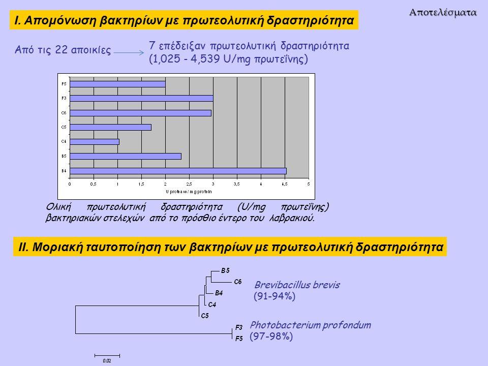 Αποτελέσματα Ολική πρωτεολυτική δραστηριότητα (U/mg πρωτεΐνης) βακτηριακών στελεχών από το πρόσθιο έντερο του λαβρακιού.