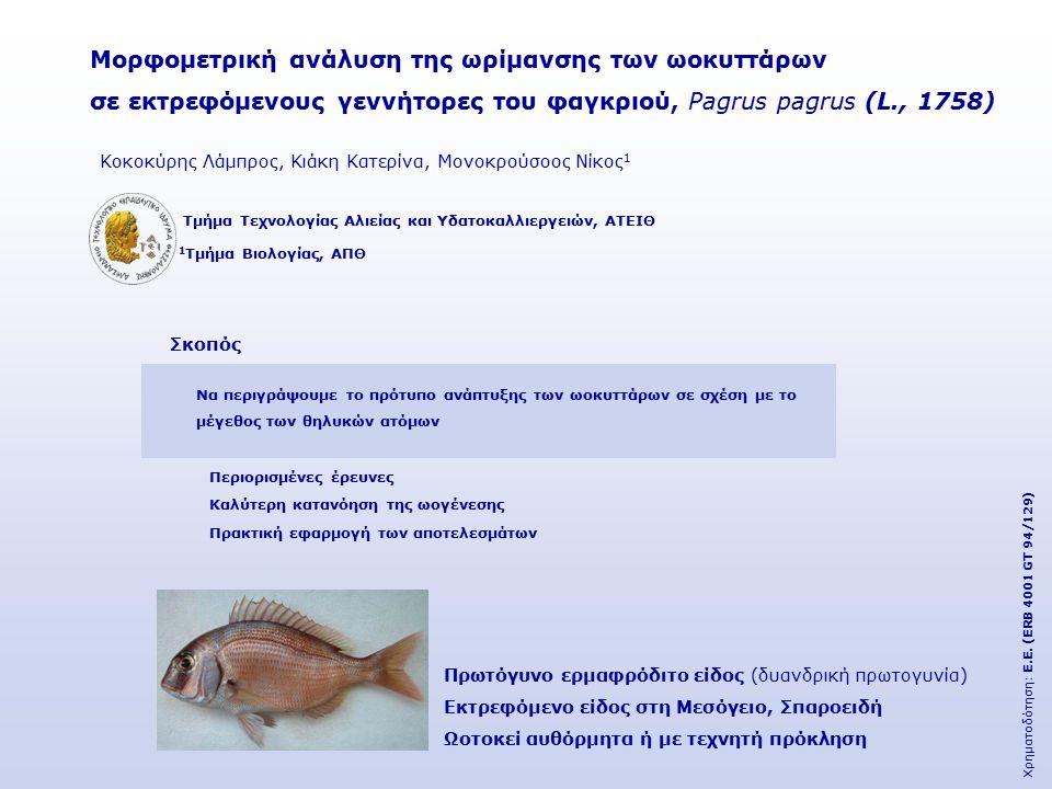 Μορφομετρική ανάλυση της ωρίμανσης των ωοκυττάρων σε εκτρεφόμενους γεννήτορες του φαγκριού, Pagrus pagrus (L., 1758) 1 Τμήμα Βιολογίας, ΑΠΘ Τμήμα Τεχνολογίας Αλιείας και Υδατοκαλλιεργειών, ΑΤΕΙΘ Κοκοκύρης Λάμπρος, Κιάκη Κατερίνα, Μονοκρούσοος Νίκος 1 Χρηματοδότηση: Ε.Ε.