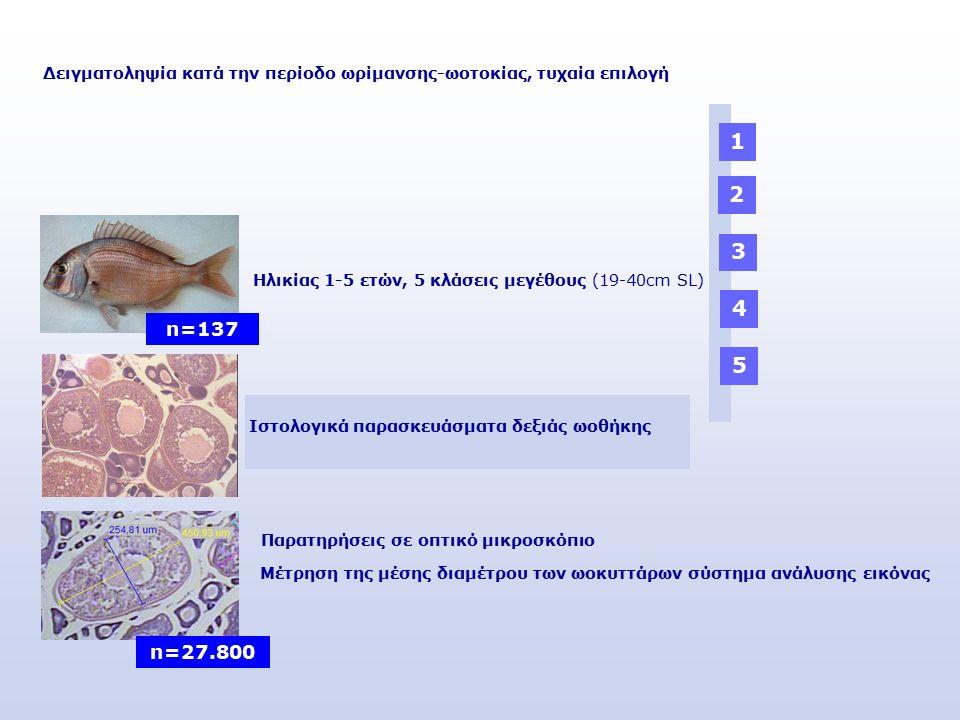 Μέτρηση της μέσης διαμέτρου των ωοκυττάρων σύστημα ανάλυσης εικόνας Δειγματοληψία κατά την περίοδο ωρίμανσης-ωοτοκίας, τυχαία επιλογή n=137 Ηλικίας 1-5 ετών, 5 κλάσεις μεγέθους (19-40cm SL) 2 3 4 5 Παρατηρήσεις σε οπτικό μικροσκόπιο n=27.800 1 Ιστολογικά παρασκευάσματα δεξιάς ωοθήκης