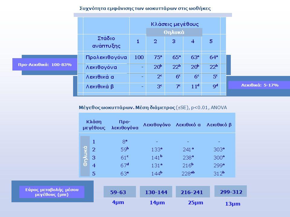 0 Λεκιθικά: 5-17% Προ-Λεκιθικά: 100-83% Συχνότητα εμφάνισης των ωοκυττάρων στις ωοθήκες Θηλυκά 59-63 130-144216-241 299-312 4μm4μm 14μm 25μm 13μm Μέγεθος ωοκυττάρων.