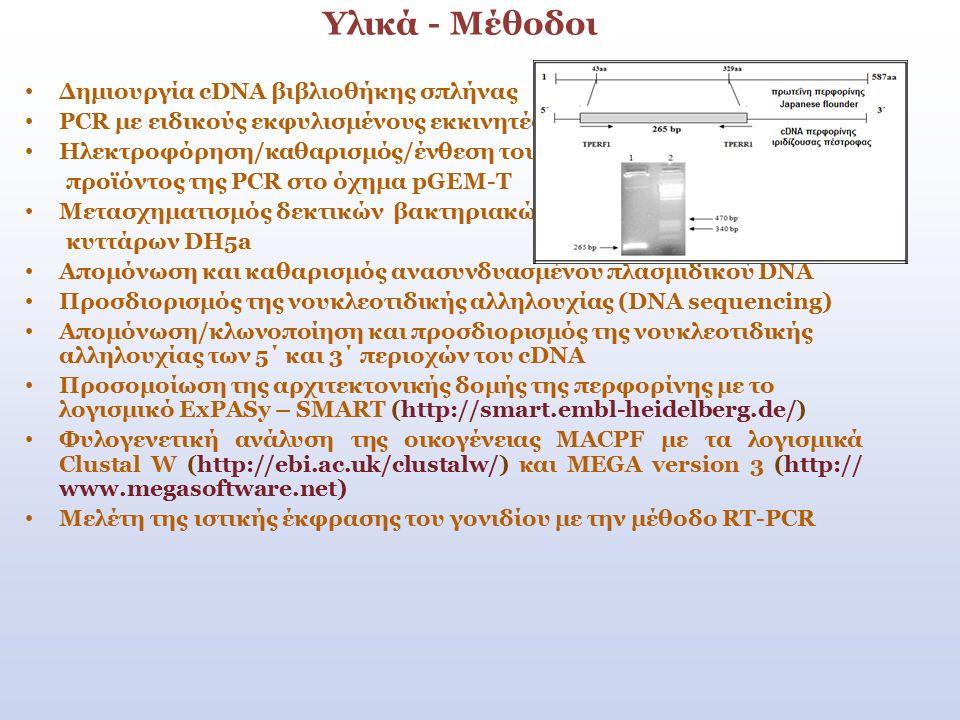 Υλικά - Μέθοδοι Δημιουργία cDNA βιβλιοθήκης σπλήνας PCR με ειδικούς εκφυλισμένους εκκινητές Ηλεκτροφόρηση/καθαρισμός/ένθεση του προϊόντος της PCR στο όχημα pGEM-T Μετασχηματισμός δεκτικών βακτηριακών κυττάρων DH5a Απομόνωση και καθαρισμός ανασυνδυασμένου πλασμιδικού DNA Προσδιορισμός της νουκλεοτιδικής αλληλουχίας (DNA sequencing) Απομόνωση/κλωνοποίηση και προσδιορισμός της νουκλεοτιδικής αλληλουχίας των 5΄ και 3΄ περιοχών του cDNA Προσομοίωση της αρχιτεκτονικής δομής της περφορίνης με το λογισμικό ExPASy – SMART (http://smart.embl-heidelberg.de/) Φυλογενετική ανάλυση της οικογένειας MACPF με τα λογισμικά Clustal W (http://ebi.ac.uk/clustalw/) και MEGA version 3 (http:// www.megasoftware.net) Μελέτη της ιστικής έκφρασης του γονιδίου με την μέθοδο RT-PCR