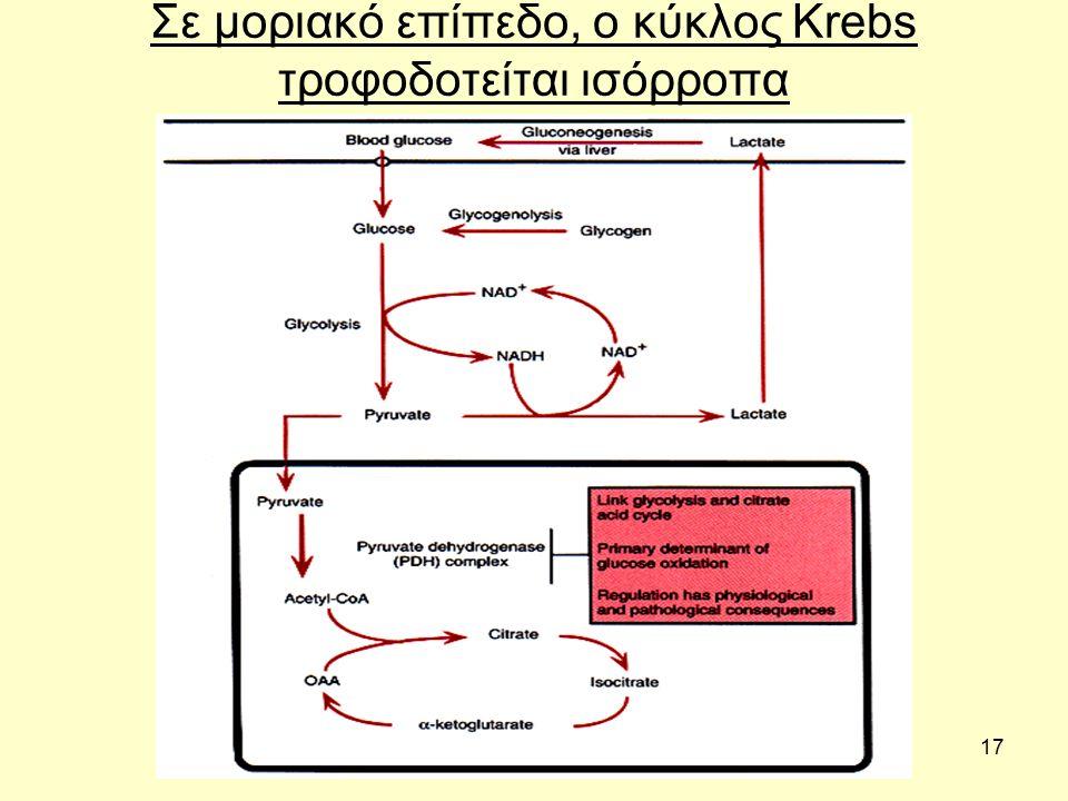 17 Σε μοριακό επίπεδο, ο κύκλος Krebs τροφοδοτείται ισόρροπα