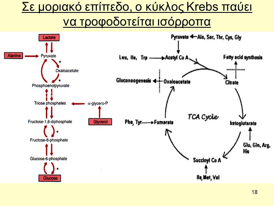 18 Σε μοριακό επίπεδο, ο κύκλος Krebs παύει να τροφοδοτείται ισόρροπα