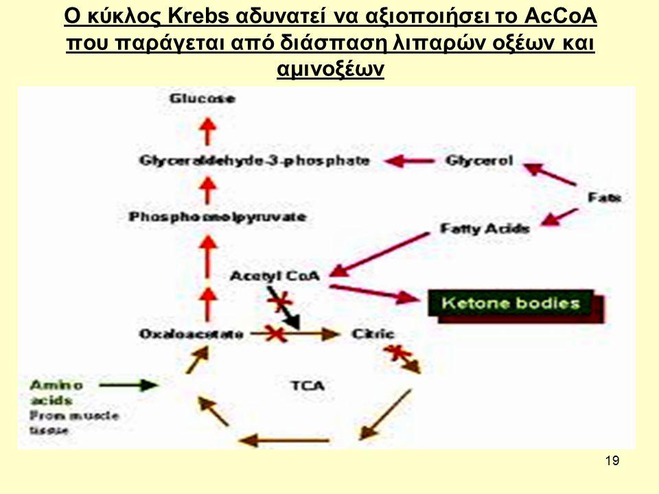 19 Ο κύκλος Krebs αδυνατεί να αξιοποιήσει το AcCoA που παράγεται από διάσπαση λιπαρών οξέων και αμινοξέων
