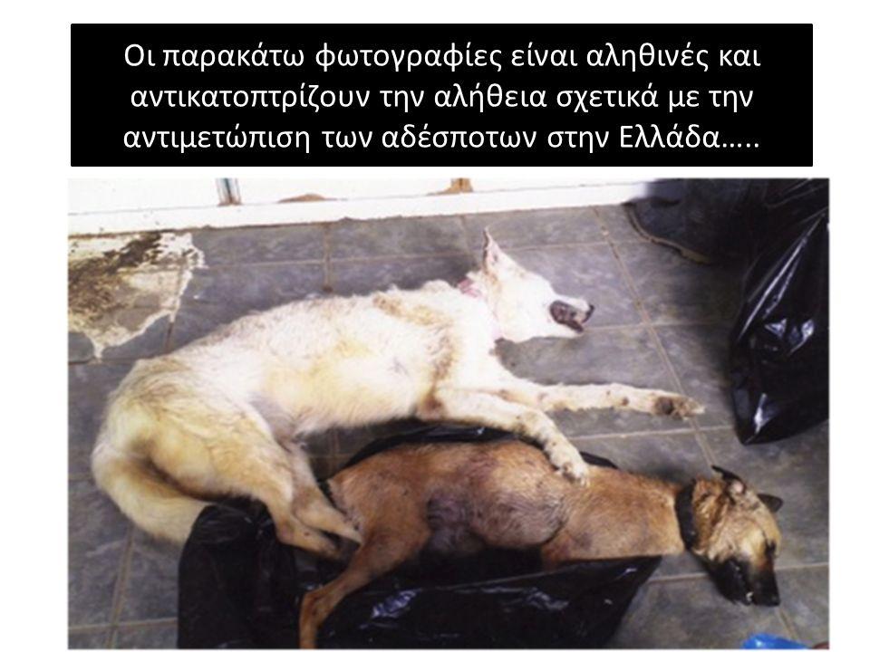 Οι παρακάτω φωτογραφίες είναι αληθινές και αντικατοπτρίζουν την αλήθεια σχετικά με την αντιμετώπιση των αδέσποτων στην Ελλάδα…..