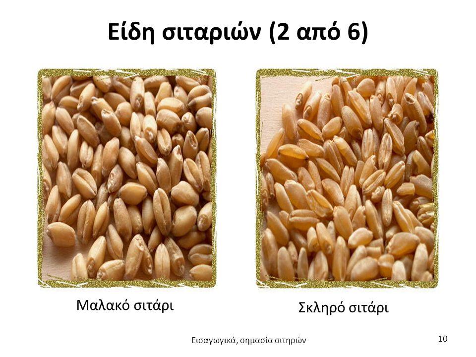 Είδη σιταριών (2 από 6) Μαλακό σιτάρι Σκληρό σιτάρι Εισαγωγικά, σημασία σιτηρών 10