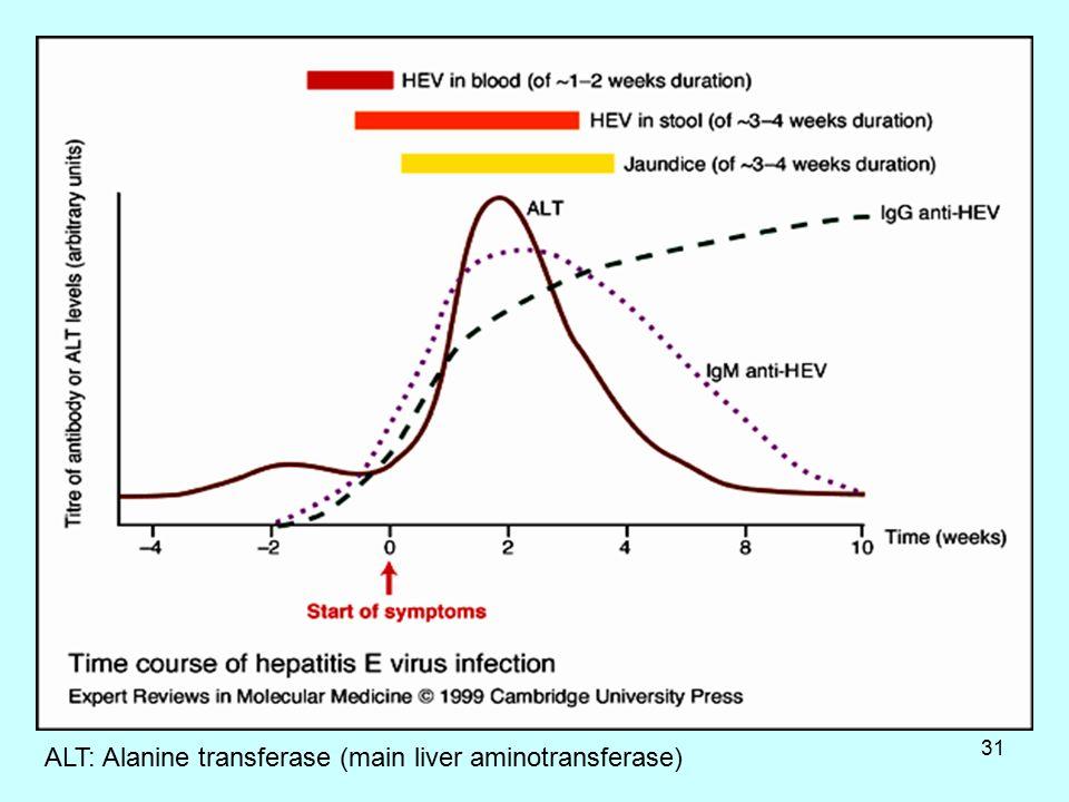 31 ALT: Alanine transferase (main liver aminotransferase)