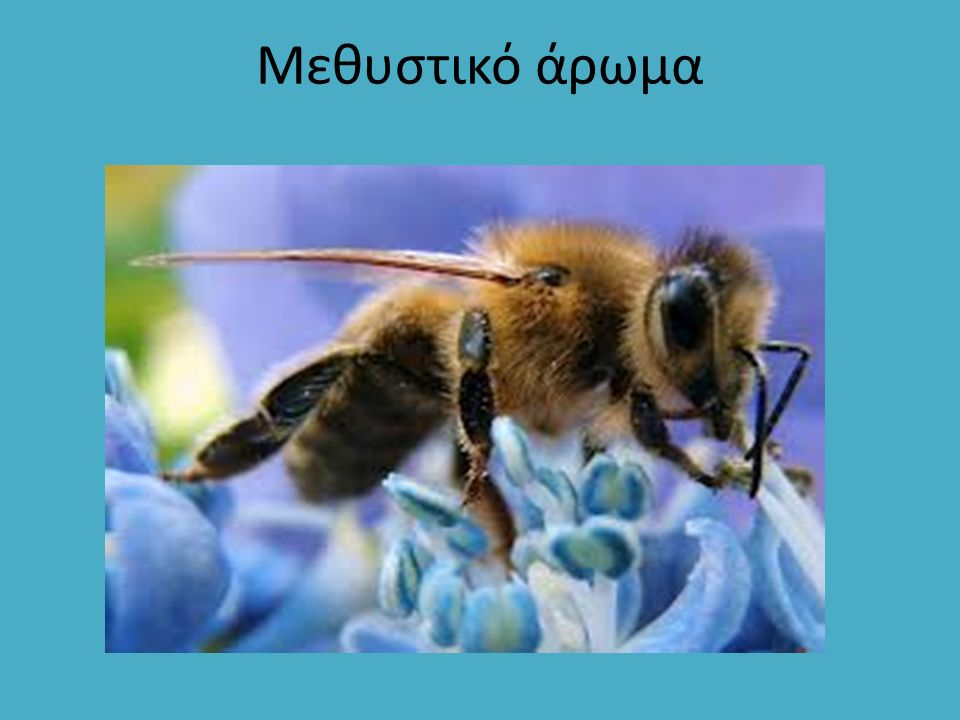 Εδώ ακουμπώ το μέλι μου