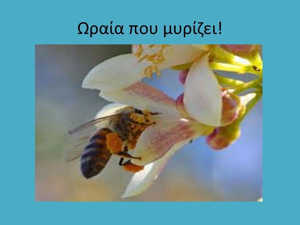 καστανόμελο Καστανιάς: Είναι ανάμειξη μελιτώματος και νέκταρος.