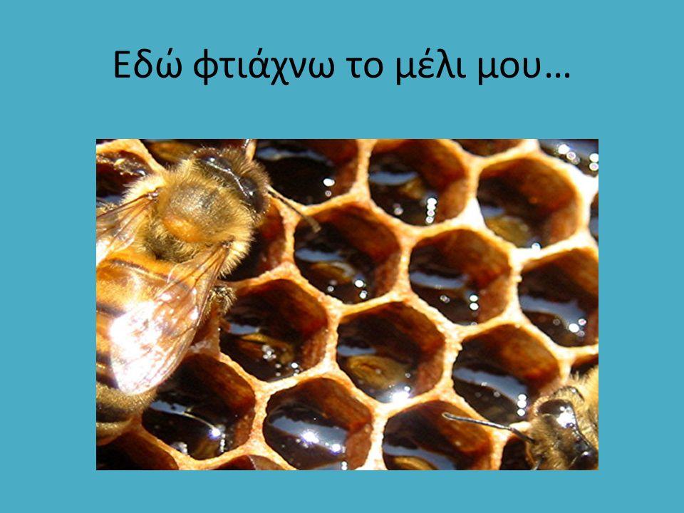 Εδώ φτιάχνω το μέλι μου…