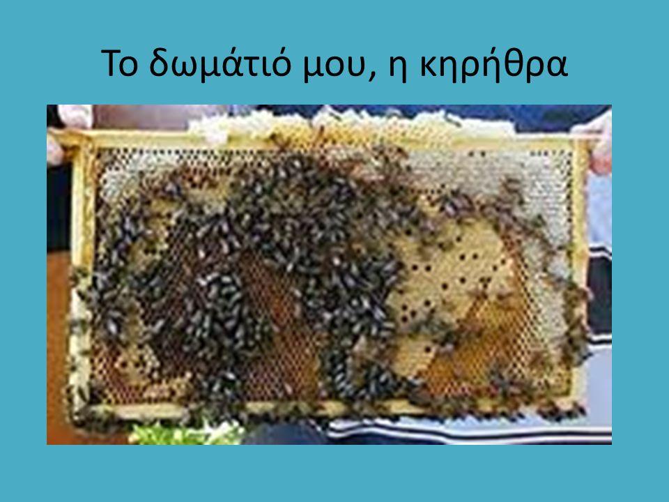 Θυμαρίσιο: Έντονα αρωματικό μέλι, εξαιρετικά ευχάριστο στη γεύση με ανοιχτόχρωμη λαμπερή εμφάνιση.