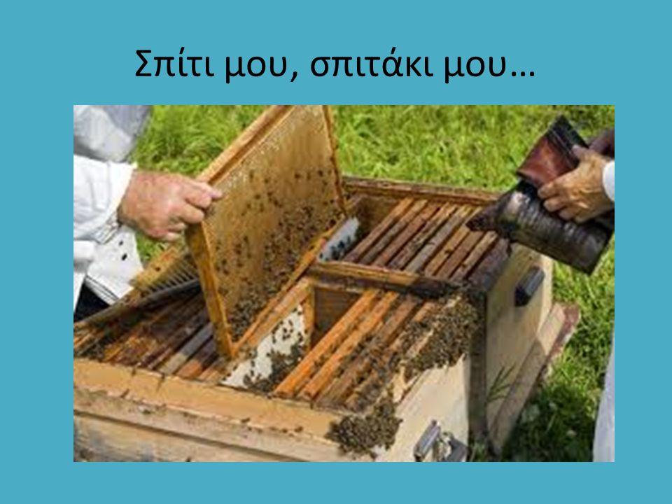 Η τροφή που παράγουν οι νεαρές εργάτριες μέλισσες και χρησιμεύει για την διατροφή της βασίλισσας.