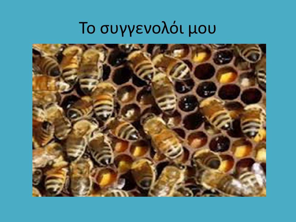 Βαμβακίου: Ανοιχτόχρωμο μέλι που μετατρέπεται σε ασπρουδερό μετά την κρυστάλλωσή του.