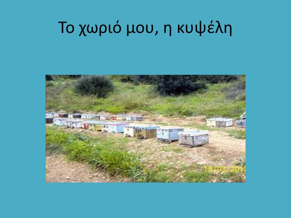 Πολύκομβου: Σκοτεινόχρωμο μέλι.