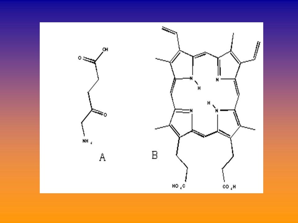 πρωτοπορφυρίνη = η πορφυρίνη της αιμοσφαιρίνης «πορφίνη»τέσσερα μόρια πυρρολίου, ενωμένα με μεθενικούς δεσμούς =CH _ σχηματίζουν την «πορφίνη» ( (ΥΠΟΘΕΤΙΚΗ ένωση- δεν μπορεί θερμοδυναμικώς να υπάρξει)