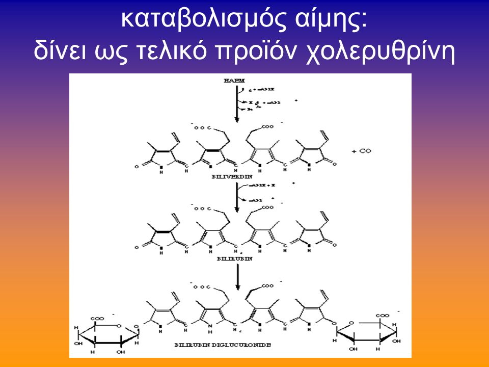 καταβολισμός αίμης: δίνει ως τελικό προϊόν χολερυθρίνη