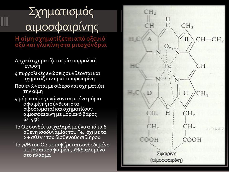 Σχηματισμός αιμοσφαιρίνης Η αίμη σχηματίζεται από οξεικό οξύ και γλυκίνη στα μιτοχόνδρια Αρχικά σχηματίζεται μία πυρρολική ενωση 4 πυρρολικές ενώσεις συνδέονται και σχηματίζουν πρωτοπορφυρίνη Που ενώνεται με σίδερο και σχηματίζει την αίμη 4 μόρια αίμης ενώνονται με ένα μόριο σφαιρίνης (σύνθεση στα ριβοσώματα) και σχηματίζουν αιμοσφαιρίνη με μοριακό βάρος 64.458 Το Ο2 συνδέεται χαλαρά με ένα από τα 6 σθένη ισοδυναμίας του Fe, όχι με τα 2 + σθένη του δισθενούς σιδίηρου Το 75% του Ο2 μεταφέρεται συνδεδεμένο με την αιμοσφαιρίνη, 3% διαλυμένο στο πλάσμα