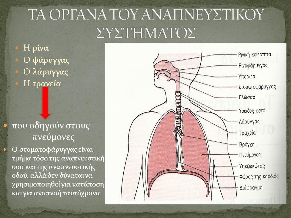 Η ρίνα Ο φάρυγγας Ο λάρυγγας Η τραχεία που οδηγούν στους πνεύμονες Ο στοματοφάρυγγας είναι τμήμα τόσο της αναπνευστικής όσο και της αναπνευστικής οδού, αλλά δεν δύναται να χρησιμοποιηθεί για κατάποση και για αναπνοή ταυτόχρονα
