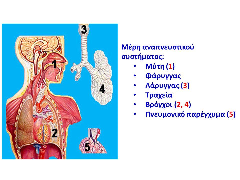 Μέρη αναπνευστικού συστήματος: Μύτη (1) Φάρυγγας Λάρυγγας (3) Τραχεία Βρόγχοι (2, 4) Πνευμονικό παρέγχυμα (5)
