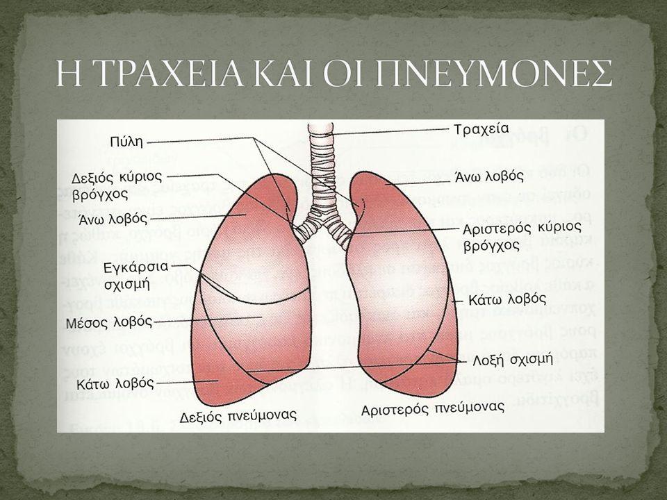 Εξωτερική αναπνοή Οι παθήσεις που αυξάνουν την απόσταση που διανύουν τα αέρια μεταξύ των κυψελίδων και των πνευμονικών τριχοειδών π.χ πνευμονία, πνευμονικό οίδημα διαταράσσουν και την ανταλλαγή του Ο2 & CO2 Εσωτερική αναπνοή Το Ο2 μεταφέρεται με την οξυαιμοσφαιρίνη και διαχέεται στους ιστούς, ενώ απομακρύνεται το CO2