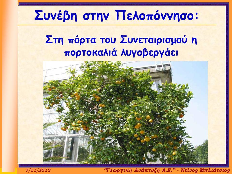Συνέβη στην Πελοπόννησο: Στη πόρτα του Συνεταιρισμού η πορτοκαλιά λυγοβεργάει Γεωργική Ανάπτυξη Α.Ε. - Ντίνος Μπλιάτσιος 7/11/2013