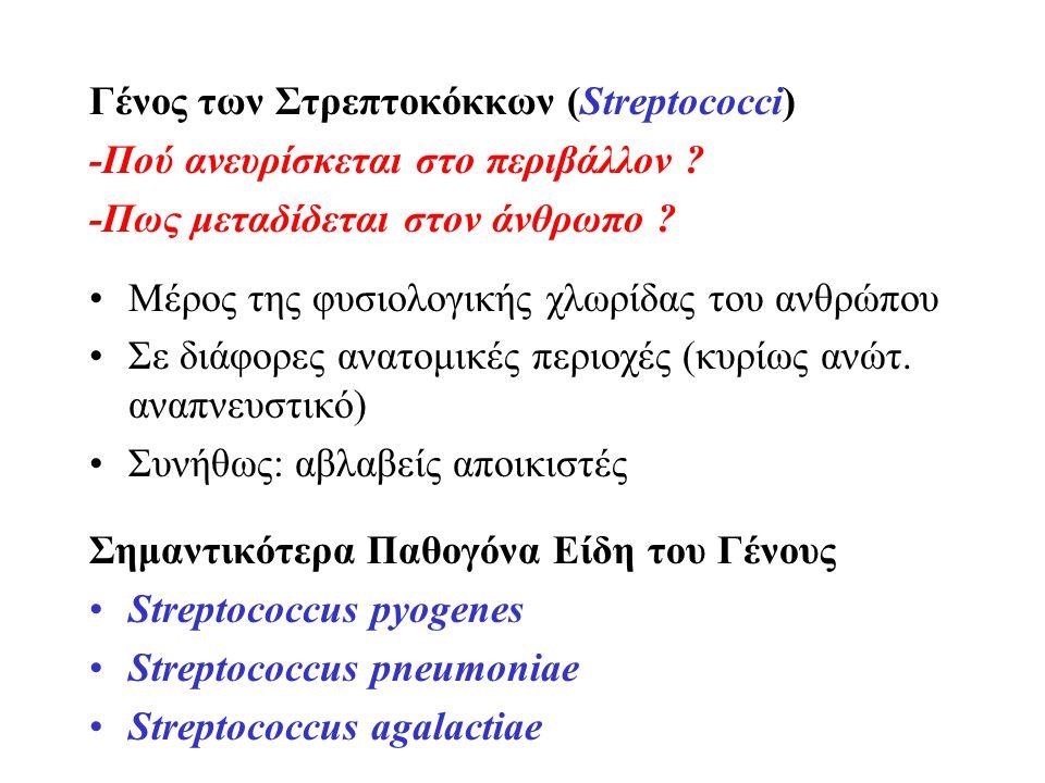 Γένος των Στρεπτοκόκκων (Streptococci) -Πού ανευρίσκεται στο περιβάλλον ? -Πως μεταδίδεται στον άνθρωπο ? Μέρος της φυσιολογικής χλωρίδας του ανθρώπου