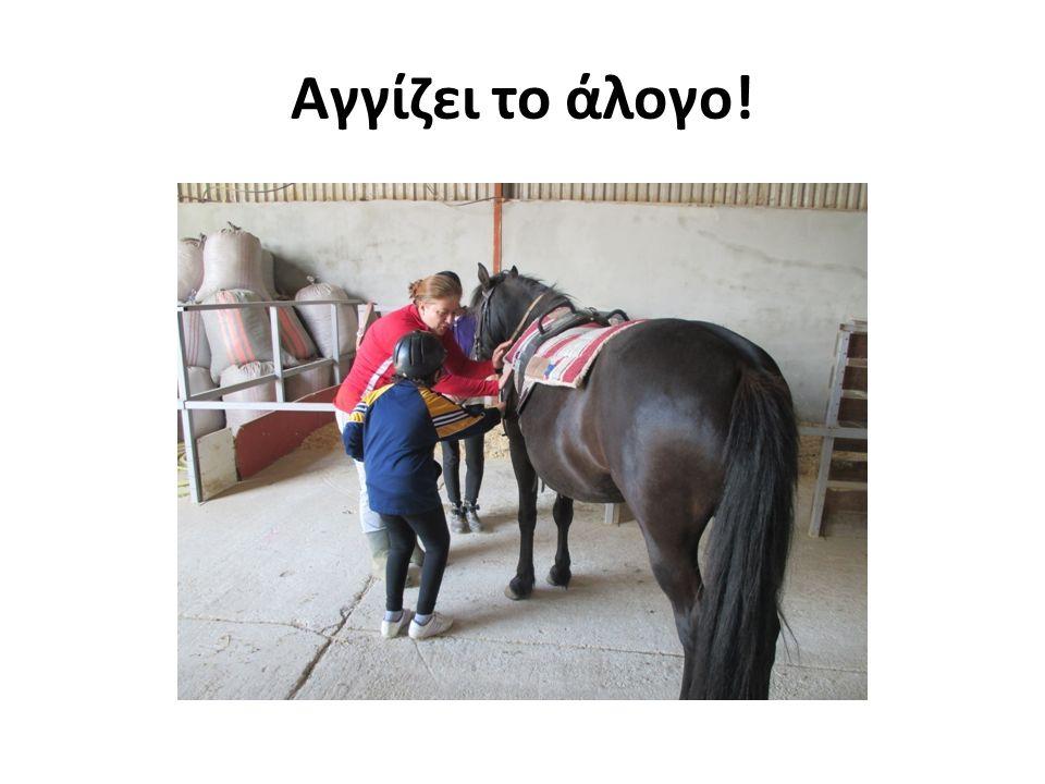 Αγγίζει το άλογο!
