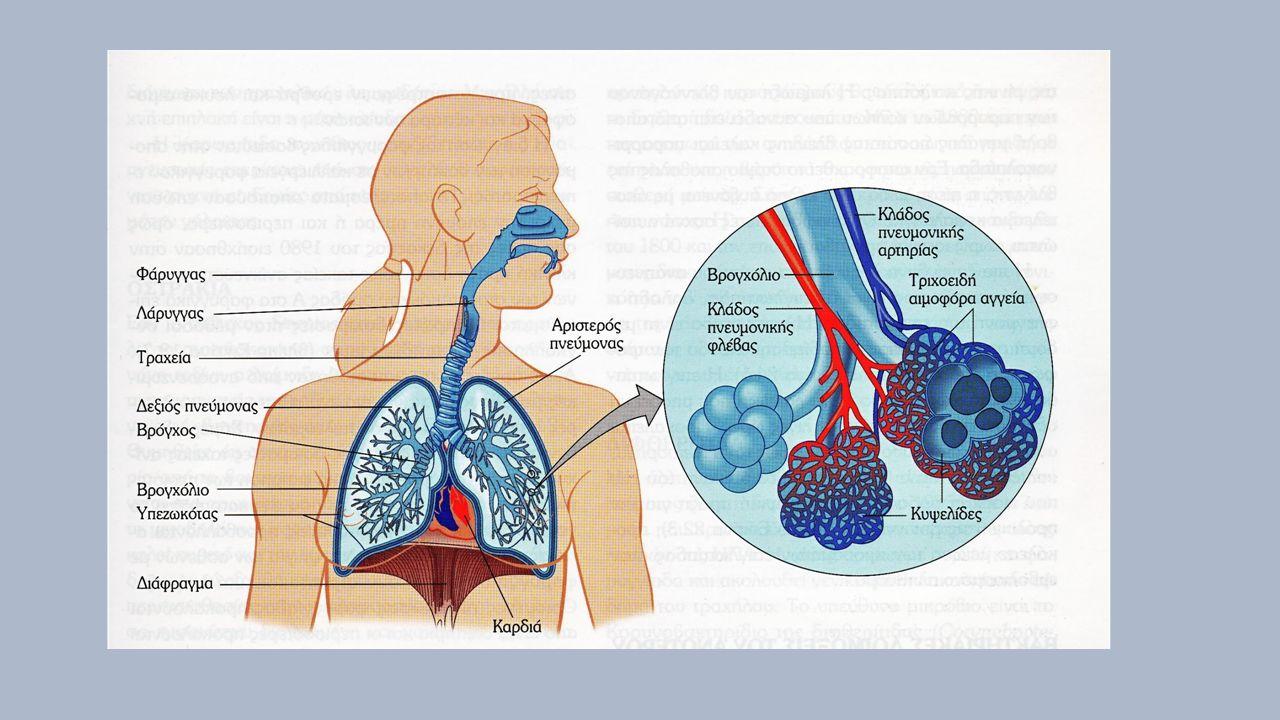 Ιογενείς λοιμώξεις – το κοινό κρυολόγημα >200 ιοί 50% ρινοïοί (>113 ορότυποι) 15-20% κοροναïοί 10% άλλοι ιοί Κλινική εικόνα: πταρμός, πυρέτιο, συνάχι, ρινική συμφόρηση, βήχας, πονόλαιμος Επιλοκές: λαρυγγίτιδα, μέση ωτίτιδα, παραρρινοκολπίτιδα, λοιμώξεις κατ.