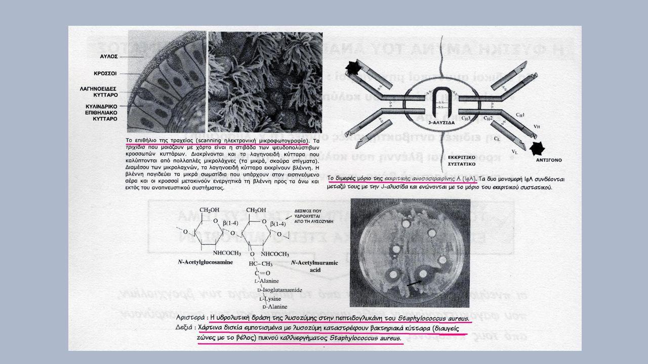 Παθογενετικοί μηχανισμοί 1.Προσκολλητικότητα – Gram(+): πρωτεϊνη Μ (S.pyogenes) και λιποτειχοϊκά οξέαέλ (S.pyogenes –viridans, S.aureus) – Gram(-): φίμπριες (Εντεροβακτηριακά, P.