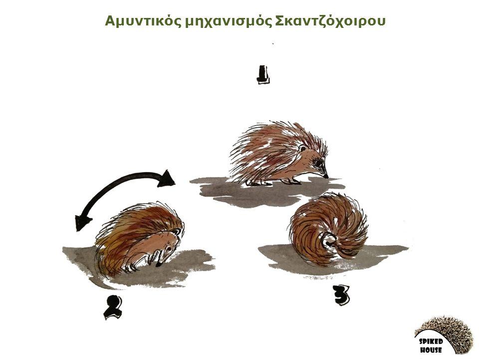 Αμυντικός μηχανισμός Σκαντζόχοιρου