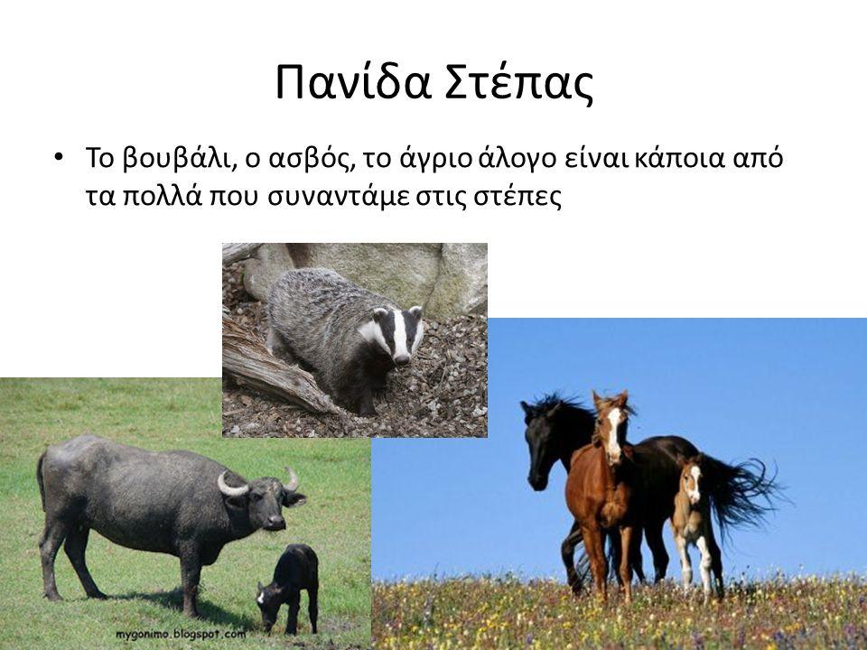 Πανίδα Στέπας Το βουβάλι, ο ασβός, το άγριο άλογο είναι κάποια από τα πολλά που συναντάμε στις στέπες