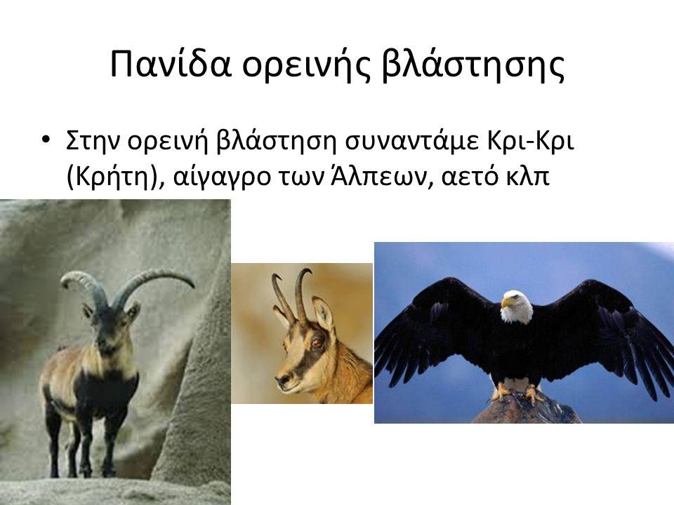 Πανίδα ορεινής βλάστησης Στην ορεινή βλάστηση συναντάμε Κρι-Κρι (Κρήτη), αίγαγρο των Άλπεων, αετό κλπ