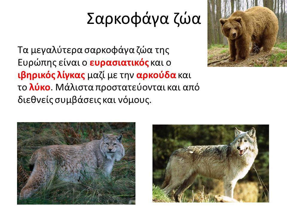 Σαρκοφάγα ζώα Τα μεγαλύτερα σαρκοφάγα ζώα της Ευρώπης είναι ο ευρασιατικός και ο ιβηρικός λίγκας μαζί με την αρκούδα και το λύκο. Μάλιστα προστατεύοντ
