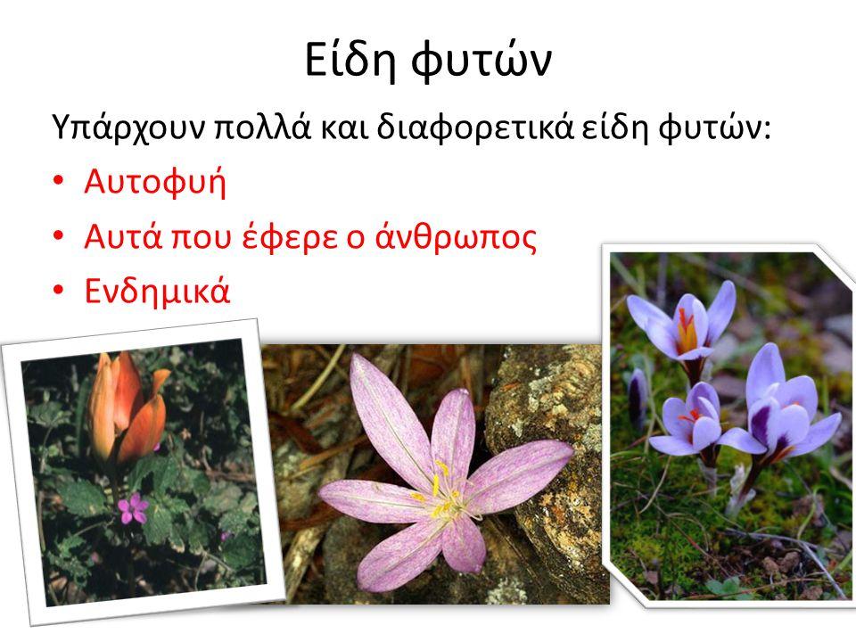 Είδη φυτών Υπάρχουν πολλά και διαφορετικά είδη φυτών: Αυτοφυή Αυτά που έφερε ο άνθρωπος Ενδημικά