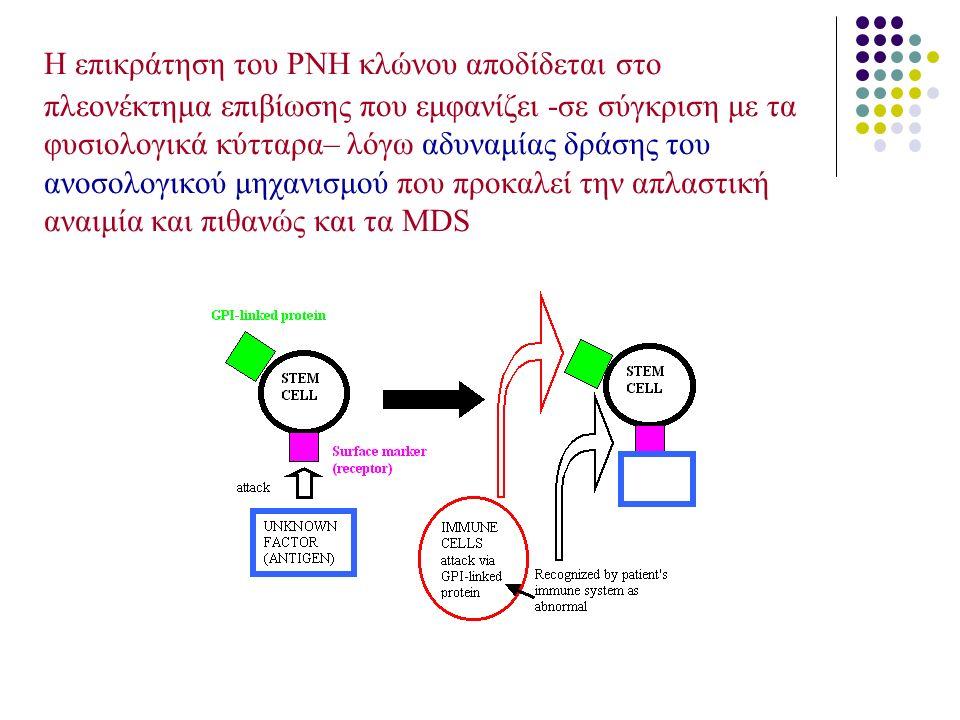 Η επικράτηση του PNH κλώνου αποδίδεται στο πλεονέκτημα επιβίωσης που εμφανίζει -σε σύγκριση με τα φυσιολογικά κύτταρα– λόγω αδυναμίας δράσης του ανοσο
