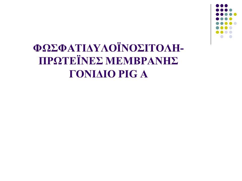 ΠΡΩΤΕΪΝΕΣ ΜΕΜΒΡΑΝΗΣ ΣΥΝΔΕΟΜΕΝΕΣ ΜΕΣΩ ΦΩΣΦΑΤΙΔΥΛΟΪΝΟΣΙΤΟΛΗΣ GPI-Πρωτεΐνες Σύνδεση γλυκοζαμίνης του τετρασακ- χαρίτη «γλυκοζαμίνη-μανόζη- μανό- ζη- μανόζη» με τη φωσφορική ρίζα της φωσφατιδυλοϊνοσιτόλης (φωσφολιπίδιο μεμβράνης) Υπεύθυνο ένζυμο:α1,6-Ν-ακετυλο- γλυκοζαμινυλ-τρανσφεράση Τετραπλό σύμπλεγμα ενζύμων που κωδικοποιούνται από 4 γονίδια: PIGA, PIGC, PIGH, GPI1