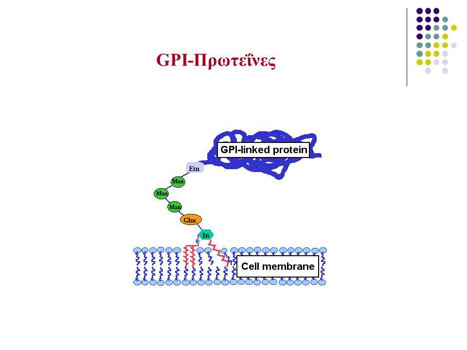 ΓΟΝΙΔΙΟ PIG-A Φωσφατιδυλο-ινοσιτόλ-γλυκάνη ομάδας Α Προσδιορίσθηκε το 1993 Εδράζεται στο βραχύ σκέλος του χρωμοσώματος Χ (Χp22.1) αποτελείται από 6 εξόνια και το ένζυμο που κωδικοποιεί συμμετέχει στην σύνθεση της πρωτεΐνης Ν-ακέτυλο-γλυκοζάμινο-φωσφατίδυλο-ινοσιτόλης Ν-ακέτυλο-γλυκοζάμινο-φωσφατίδυλο-ινοσιτόλης Περισσότερες από 100 μεταλλάξεις του γονιδίου έχουν βρεθεί, που προκαλούν πλήρη έλλειψη, ανεπάρκεια ή δυσλειτουργία του ενζύμου και εφεξής ελλείψεις των GPI πρωτεϊνών με ποικίλα κλινικά αποτελέσματα