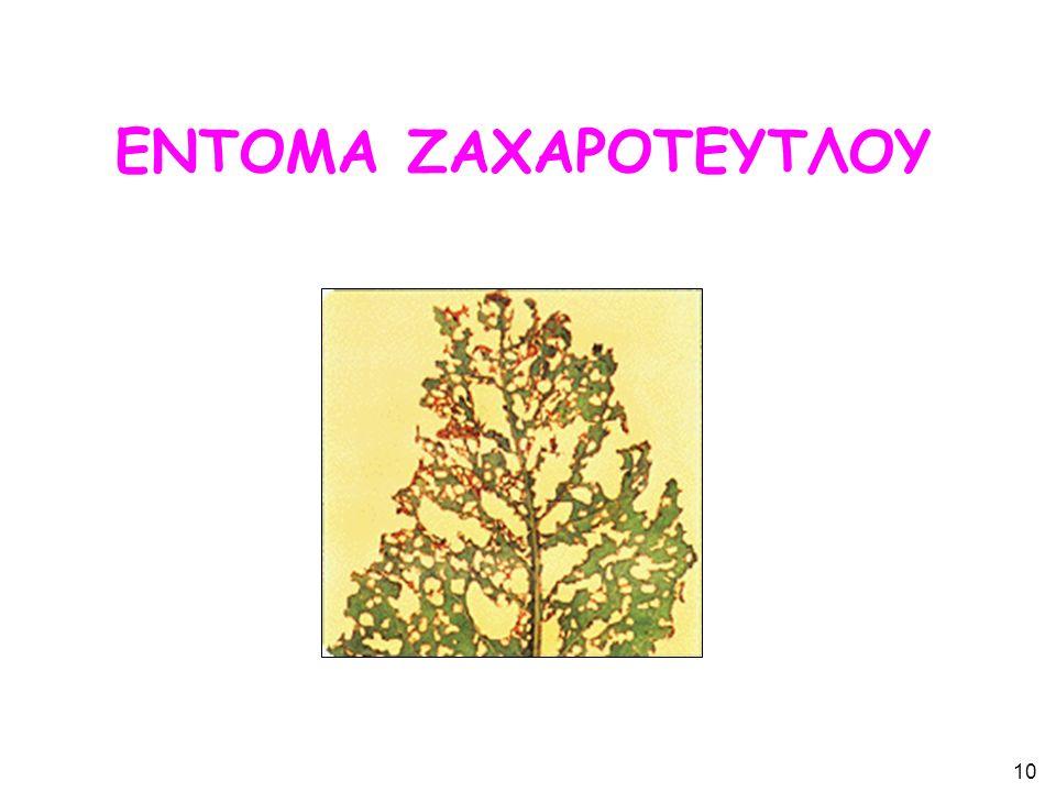 ΕΝΤΟΜΑ ΖΑΧΑΡΟΤΕΥΤΛΟΥ 10