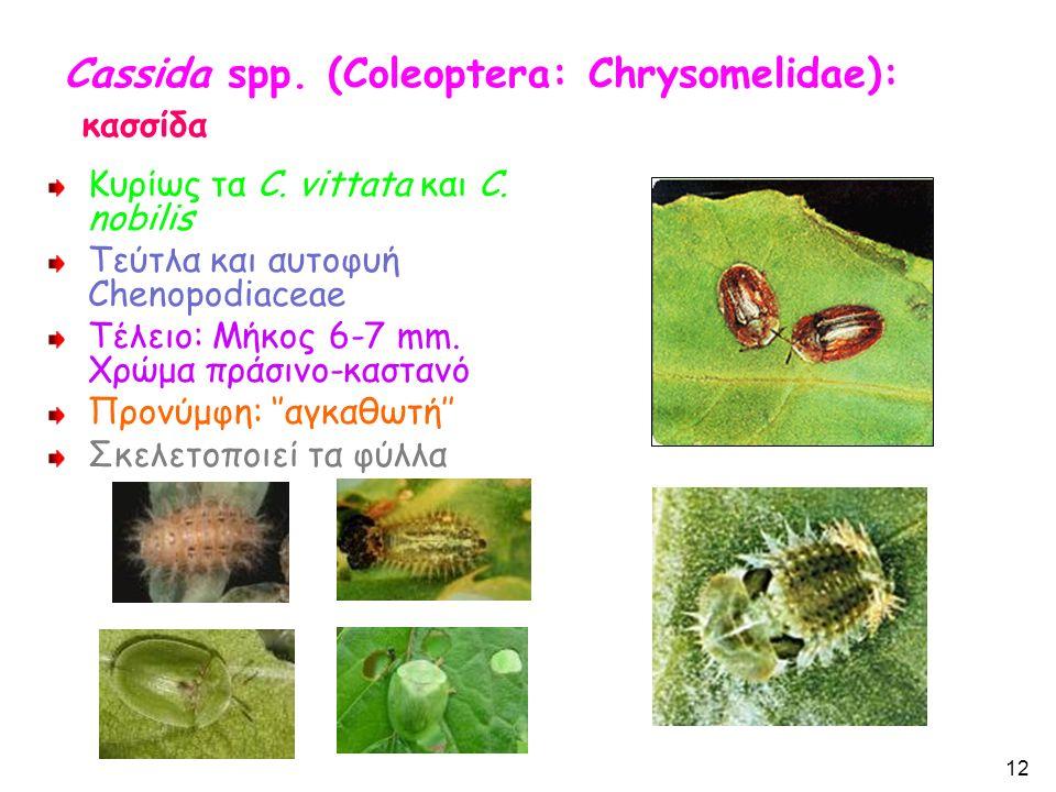 Cassida spp. (Coleoptera: Chrysomelidae): κασσίδα Κυρίως τα C.