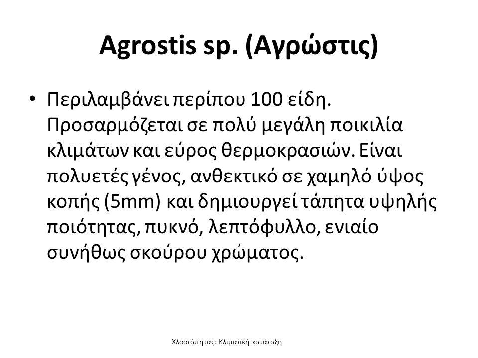 Χλοοτάπητας: Κλιματική κατάταξη Agrostis sp. (Αγρώστις) Περιλαμβάνει περίπου 100 είδη.